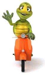 Turtle on Moped Bike