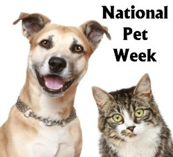 National Pet Week Creative Writing Prompts