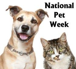 National Pet Week Creative Writing Prompts