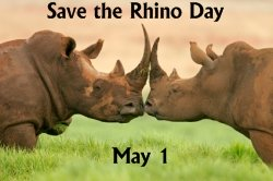 Save the Rhino Day May 1 Writing Prompts