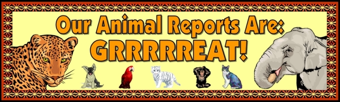 Free teaching resource to download - Animal Reports and Projects bulletin board display banner
