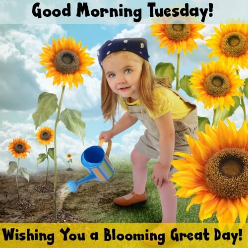 Good Morning Tuesday! Wishing you a blooming great day!