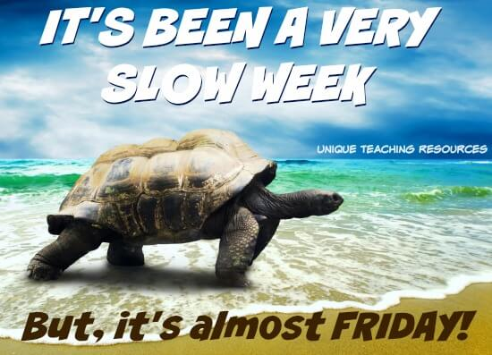 Thursday turtle:  It's been a very slow week but it's almost Friday.