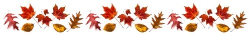 Fall Leaves Line Divider