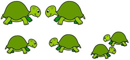 Turtle Bulletin Board Display Examples